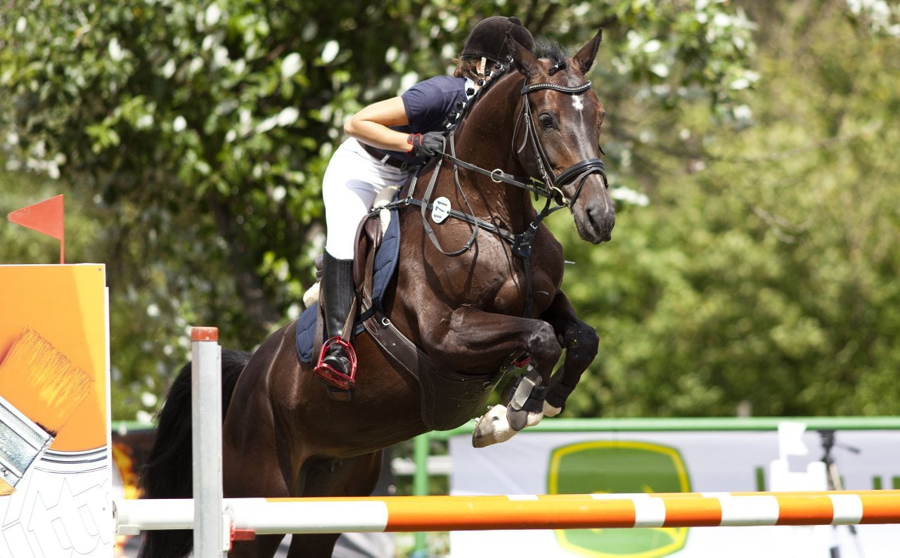 equitation-saut-obstacle-cheval