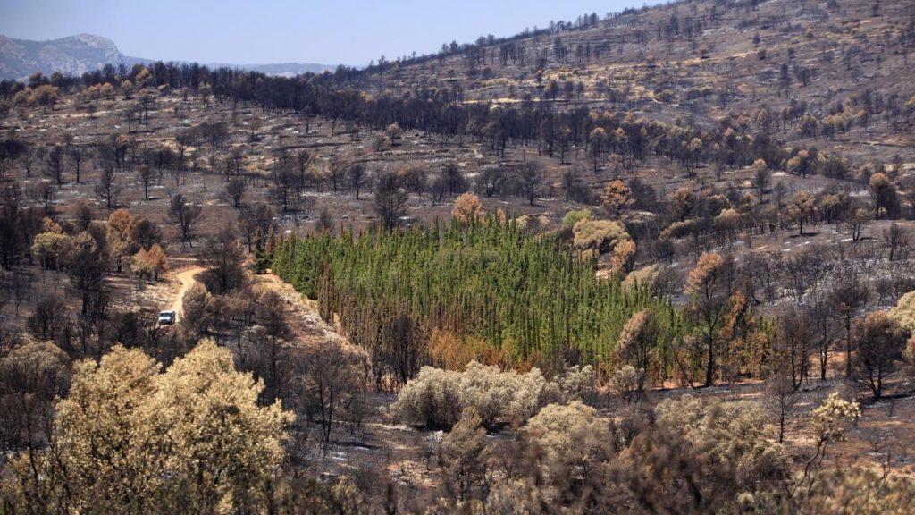 cypres mediteraneens plante anti feu