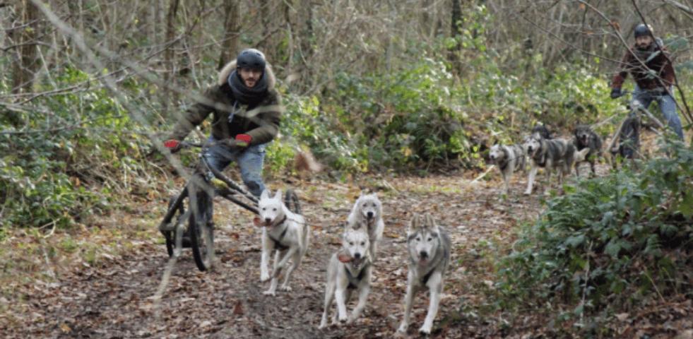 Evasion Canine activites avec chiens de traineau