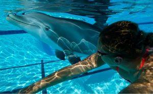 Robot dauphin