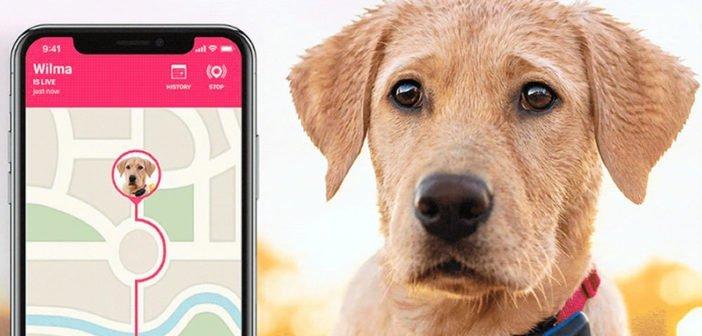 Colliers connectés chien