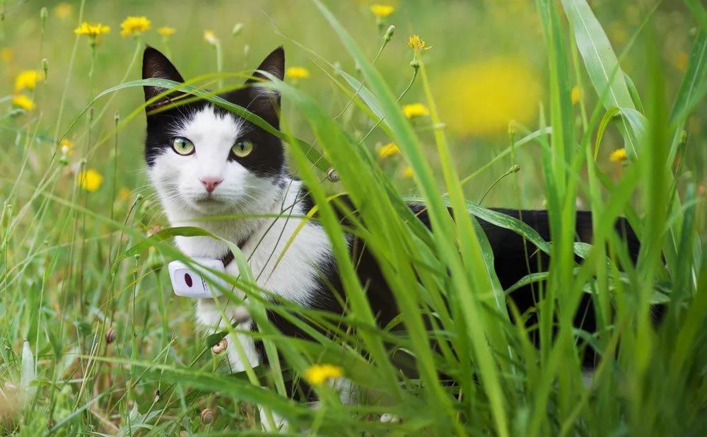 Meilleurs colliers GPS pour chats : Top des colliers connectés