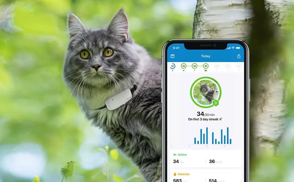 Colliers GPS chats Tractive GPS Cat Tracker