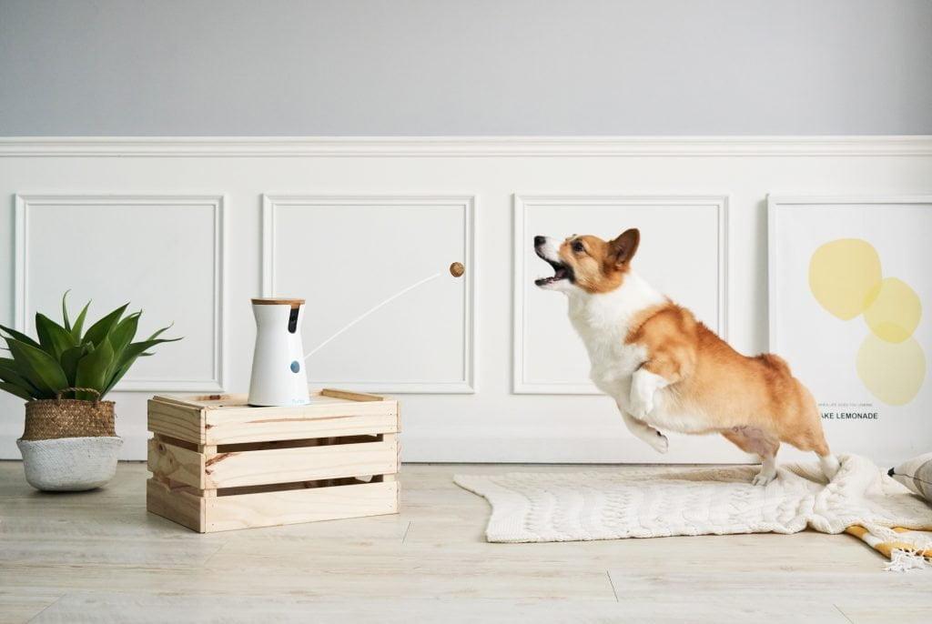 Furbo dog meilleur objet high tech