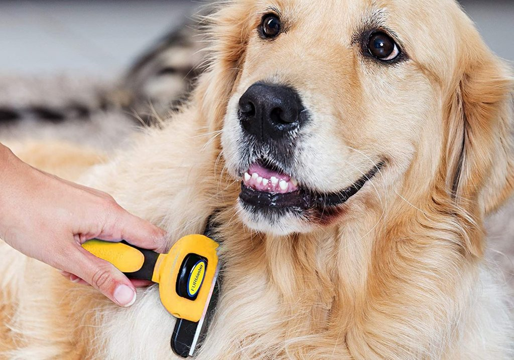 furblaster brosse chien meilleure innovation