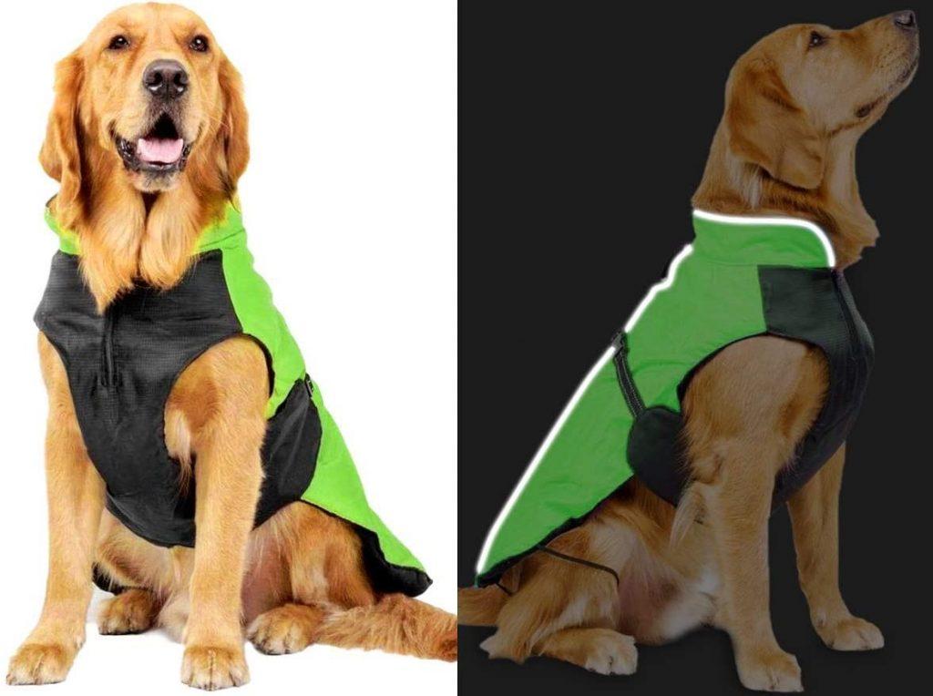 meilleur manteau pour chien innovation