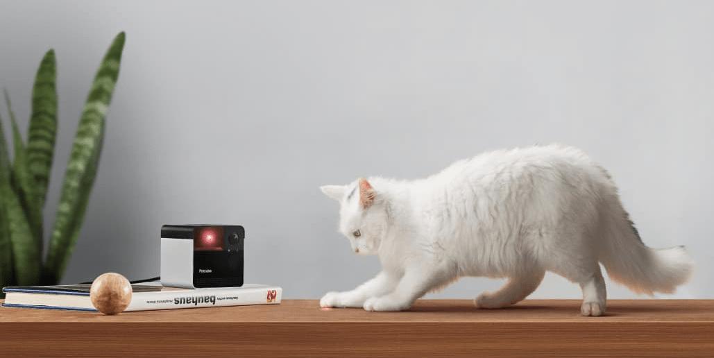 Top 15 objets et jouets innovants pour chat