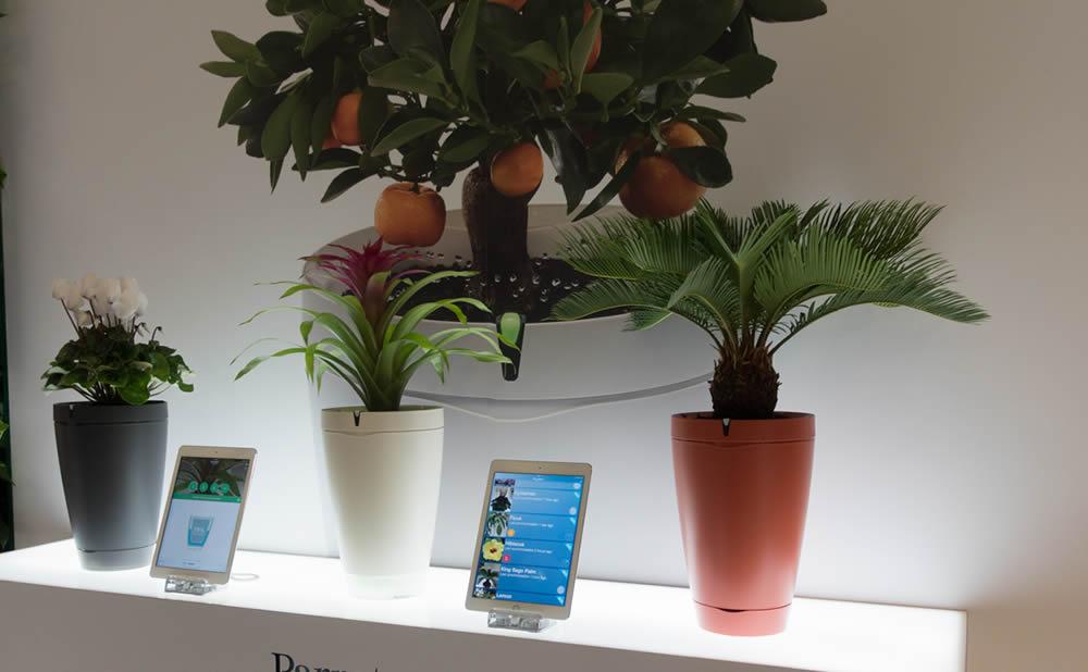 Top des meilleurs capteurs pour plantes