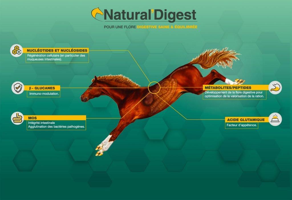 nutrition cheval natural'innov