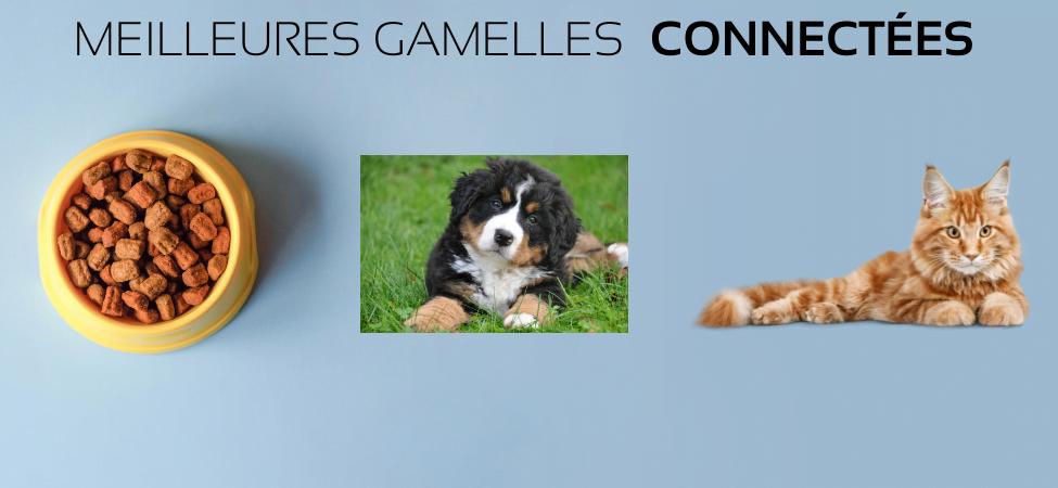Top des gamelles connectées pour gérer l'alimentation de votre chien et chat